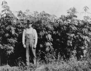 Depression Era Hemp Farm